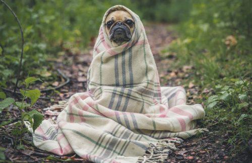寒そうな子犬