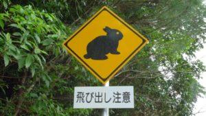 ウサギが飛び出してくる