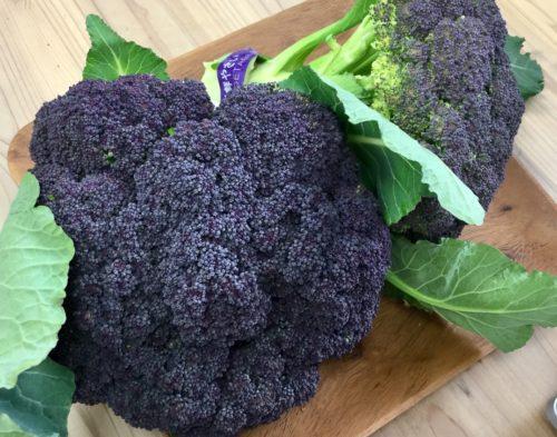 紫のブロッコリー