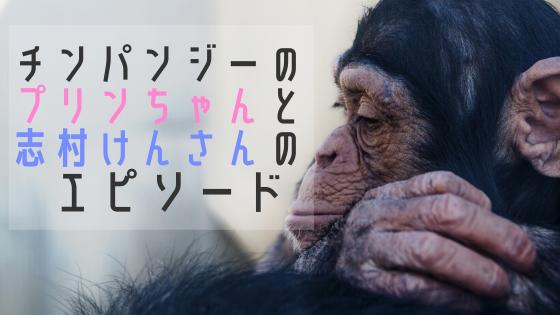 ポコちゃん チンパンジー