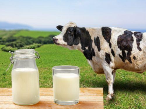 酪農の未来