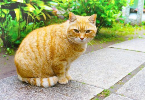 不機嫌そうな猫